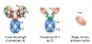available antibodies